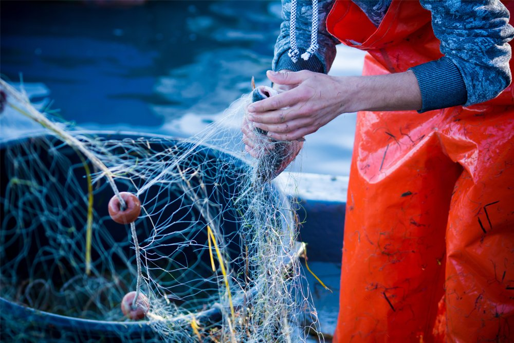what is sustainable seafood