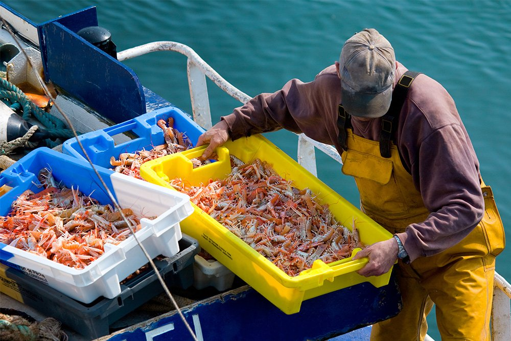 what is wild caught seafood