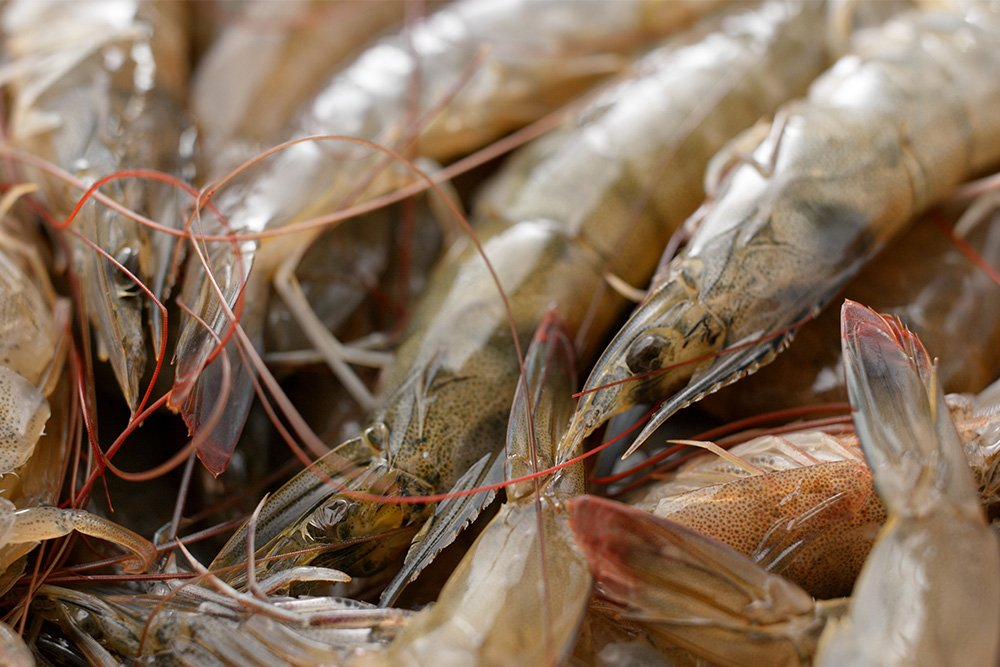 wild caught vs regular shrimp